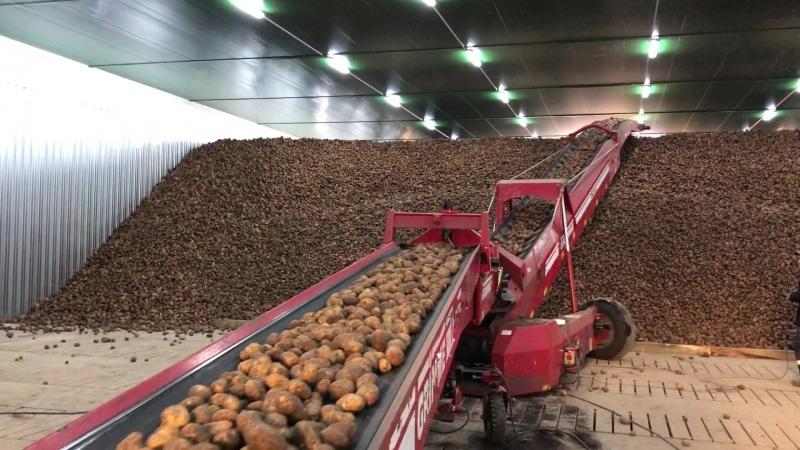 Добронравов Агро, закладка картофеля, Литовня