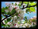 Музыка весны 2 апреля Сергей Чекалин Music of spring 2 April Music by Sergey Chekalin
