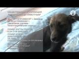 Собака по кличке «Сосиска» ищет семью