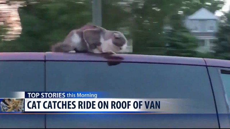 Caught on Camera: Cat Rides on Roof