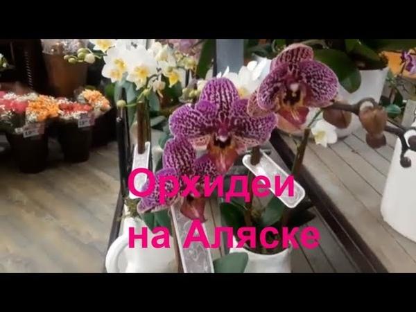 Орхидеи США Аляска Анкоридж
