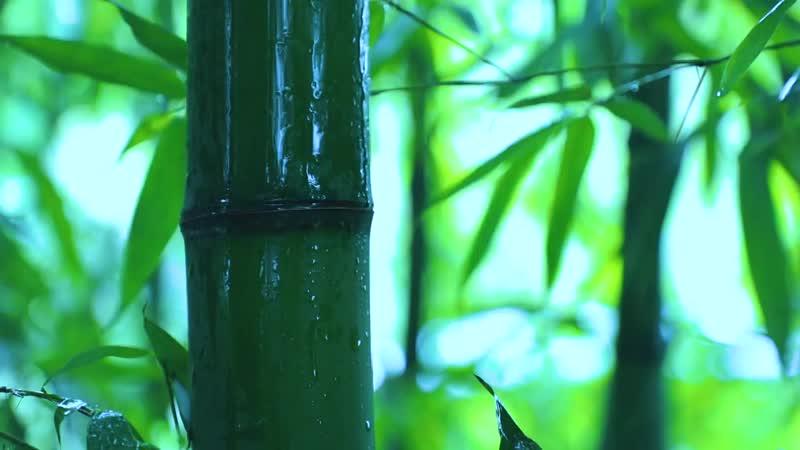 为生活添一抹淡雅绿意,用砍下的竹子制些物件儿