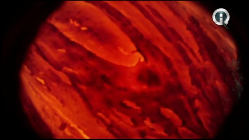 д-ф.Жзнь на влк(2013)-Тлбчк2012-2013.HDTVRip.HitWay