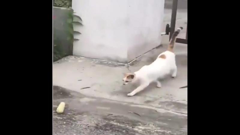 КотоПёс - Задачка для кота