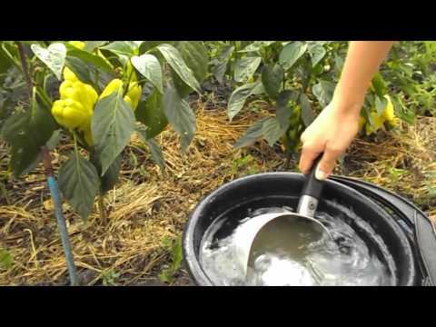 Зеленое удобрение из крапивы - органическая подкормка для перцев и помидор.