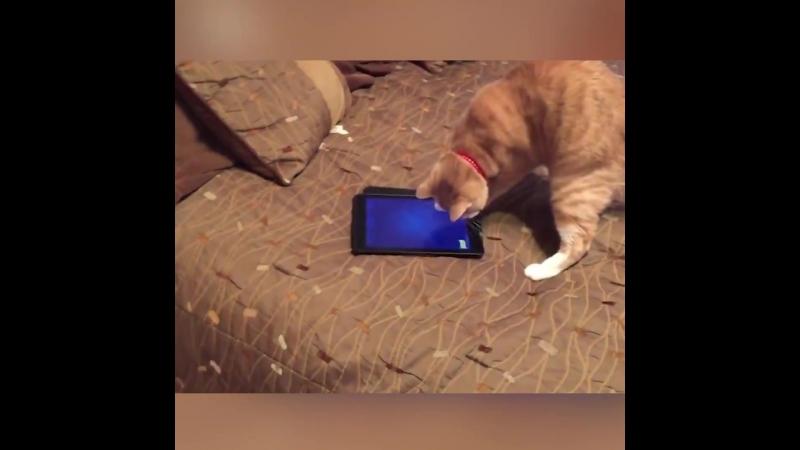 Cats VS Ipads