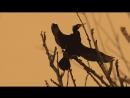 Cormorants in Pamvotis Lake ( music_ Shigeru Umebayashi )