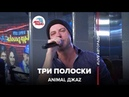 Animal ДжаZ - Три Полоски LIVE Авторадио