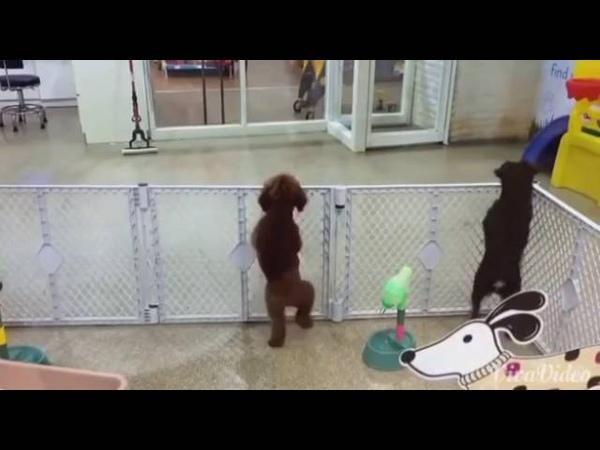 Der Tanzenden Hund lustig und süß