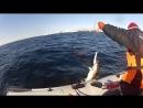 30 04 2018 Рыбалка Баренцево море п ов Рыбачий 6