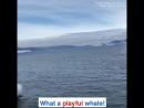 Огромный кит выпрыгнул возле лодки с туристами и окатил их водой