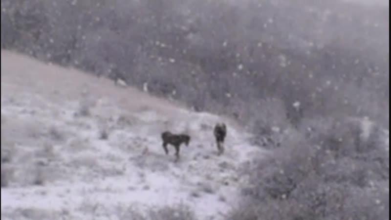 Лошадки радуются первому снегу)