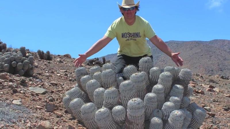 Cactus-Chile Кактусы в Чили Косогов К. Рехсан Д. Украина