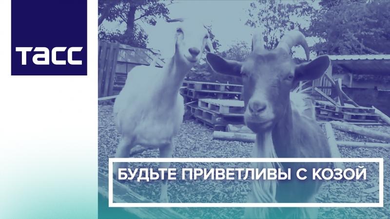Будьте приветливы с козой