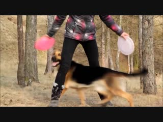Dog tricks by german shepherd britney