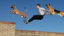 Top 10 Most Dexterity Dogs