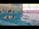 Dolphin Bay Phuket