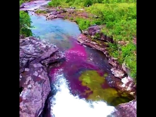 Rainbow River в Колумбии одна из самых красивых рек в мире
