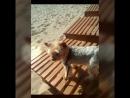 Video_20180815172611448_by_imovie.mp4