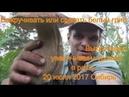 Срезать или выкручивать белый гриб 20 июля 2017 Сибирь тайга лес природа Тихая охота Сбор грибов
