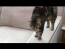 09 Адская кошка