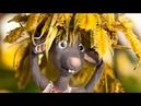 Привередливая мышка - Союзмультфильм