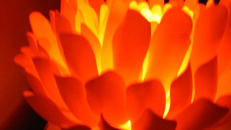 Огненная хризантема