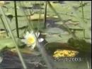Поход на озеро Талони Луга 25 июля 2003 г 2 часть