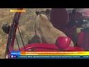 Звезда YouTube рассказал, как разгоняет прайд львов тапком
