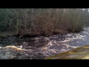 Бушует весенняя река Лососинка
