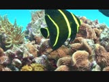 Amazing Coral Reef Fishs