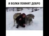 Я не думал, что волки способны на такое...