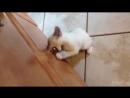 Прикол кошки, животные, смешное видео