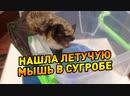 В Уфе школьница нашла летучую мышь в сугробе