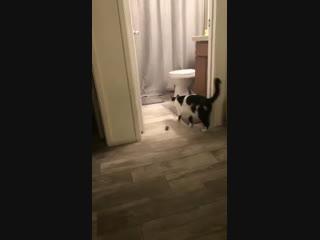 Котики, такие вот котики...