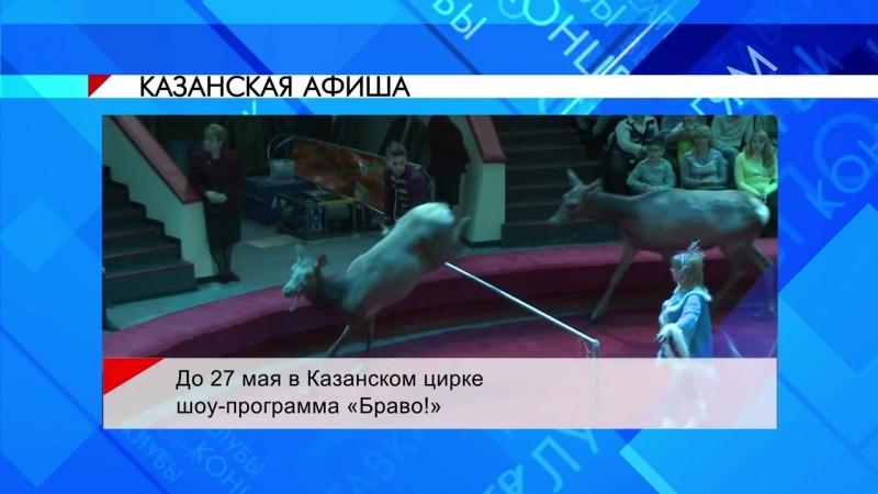 Шоу программа БРАВО в Казанском цирке