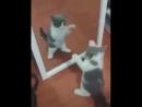 Перед зеркалом все девчонки одинаковы)