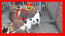 Signs Female Dog is ready to be mated cerberusk9uk