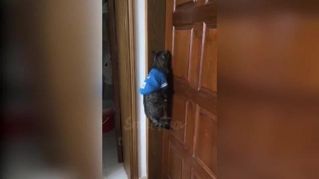 Кот кричит открой дверь