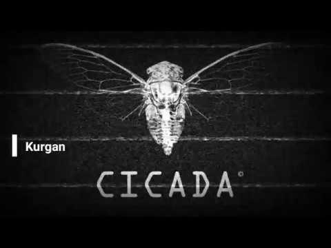 CICADA Месяц в cicada quest