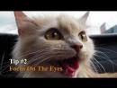 Советы по фотосъемке домашних животных