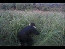 ChosunNinja - NINJA TRAINING MANUAL (Tall grass training) video example 5