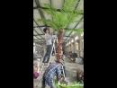собра искусственного кокоса 2