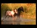 Красивая музыка о нежности и любви Арабатский конь mp4 1 mp4