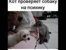 Animal_planet_vid_1_07082018_0902.mp4