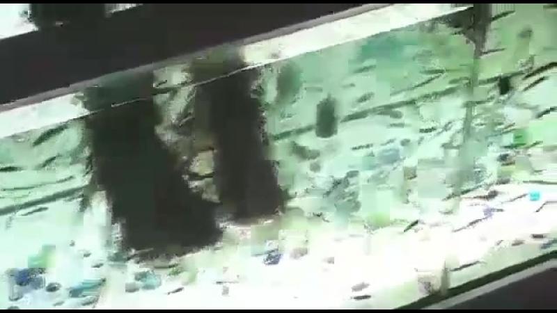 рыбки людоедки