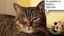 Как подготовить кошку к стерилизации (кота к кастрации)