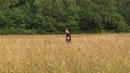 Затерянные в полях маламуты