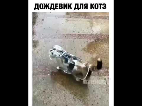 Дождевик для кота