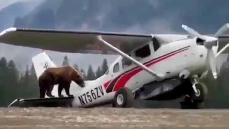 Ничего необычного для Аляски